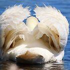 Trumpet Swan by Laura Puglia