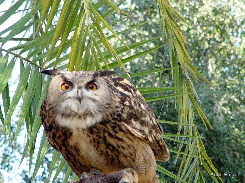 Eagle Owl 1 by Anne Smyth