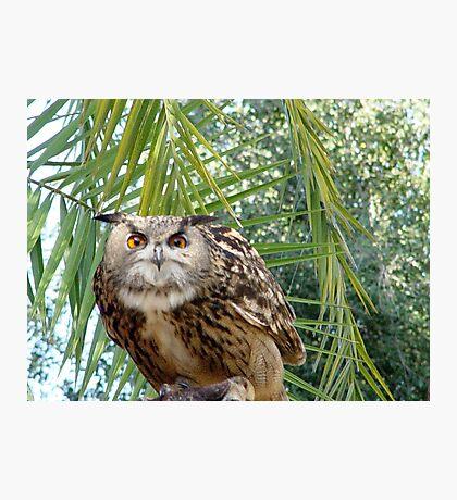 Eagle Owl 1 Photographic Print