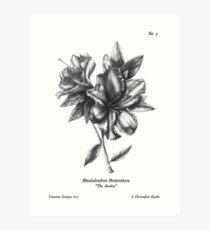 "No. 3 "" The Azalea"" Botanical Ballpoint Pen Drawing Art Print"