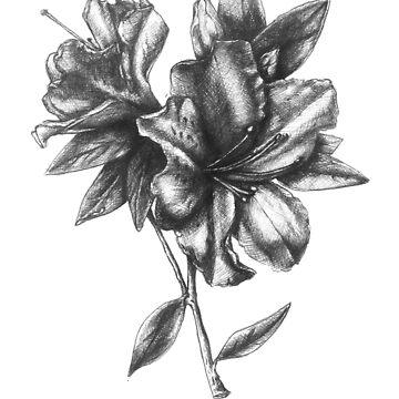 "No. 3 "" The Azalea"" Botanical Ballpoint Pen Drawing by sckuithe"