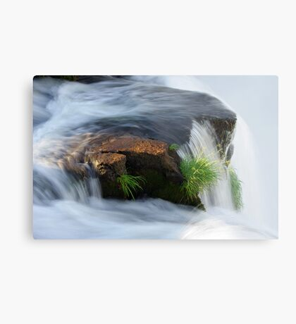 Clinging for dear life Metal Print