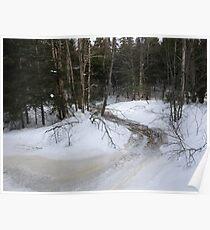 NC along Humphreys brook trail #3 Poster