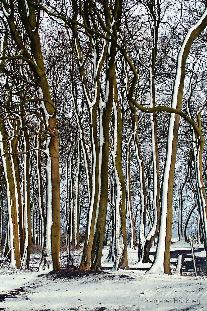 Trees in the snow by Margaret Hockney