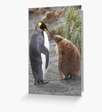 King Penguin and chick ~ Meal Time Greeting Card