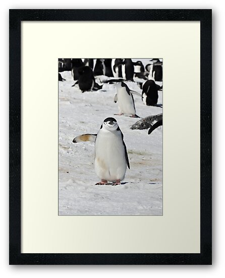 "Chinstrap Penguin  ~  ""Traffic Cop on Point Duty"" by Robert Elliott"