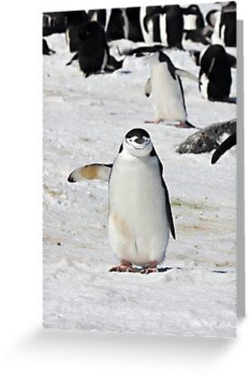 "Chinstrap Penguin  ~  ""Traffic Cop on Point Duty"" by Robert Elliott"