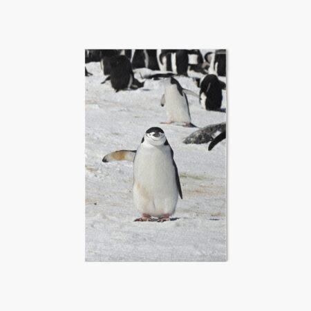 "Chinstrap Penguin  ~  ""Traffic Cop on Point Duty"" Art Board Print"