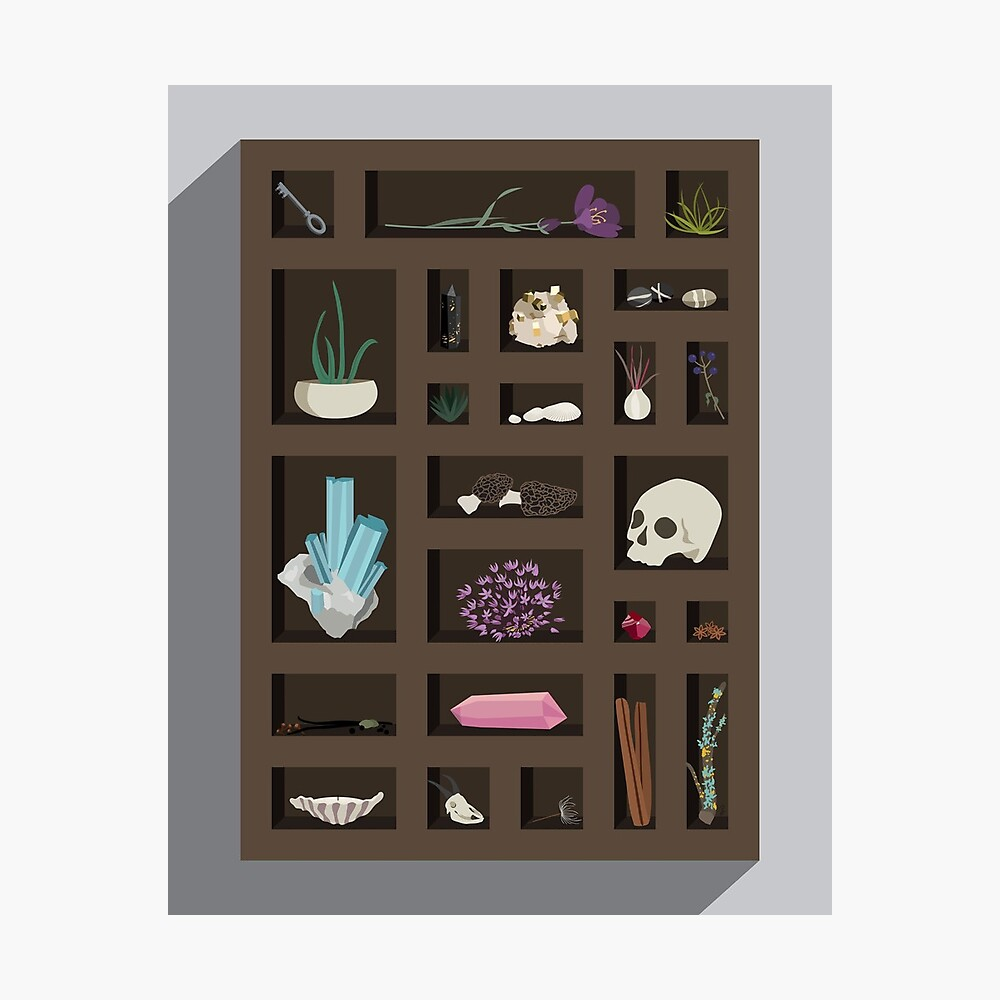 Cabinet of Curiosities Photographic Print