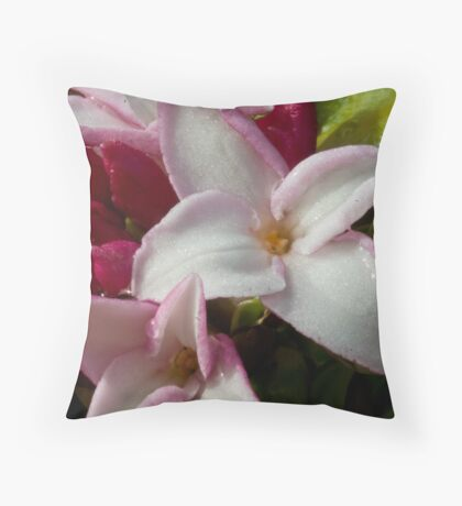 Daphne odora Throw Pillow