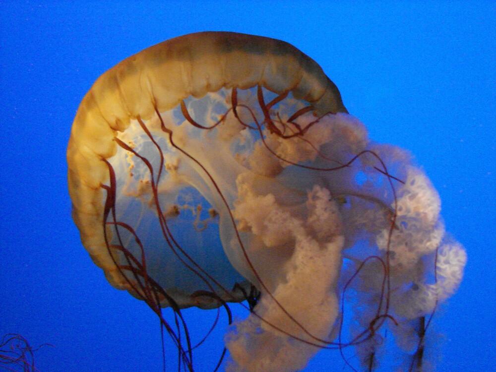 Jellyfish by tracywebb