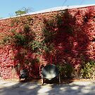 Autumn Leaves covering a shed wall! Glen Ewin Estate, Adelaide Hills, Sth. Australia. by Rita Blom