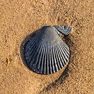 Shell by diveroptic