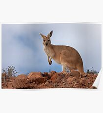 I am Australian ~ Euro Poster