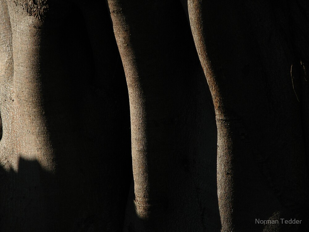 fig tree shadow abstract by Norman Tedder