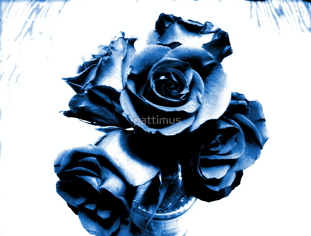 Blue Roses by pattimus