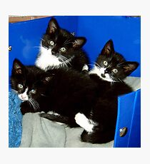 Three Little Kittens Photographic Print