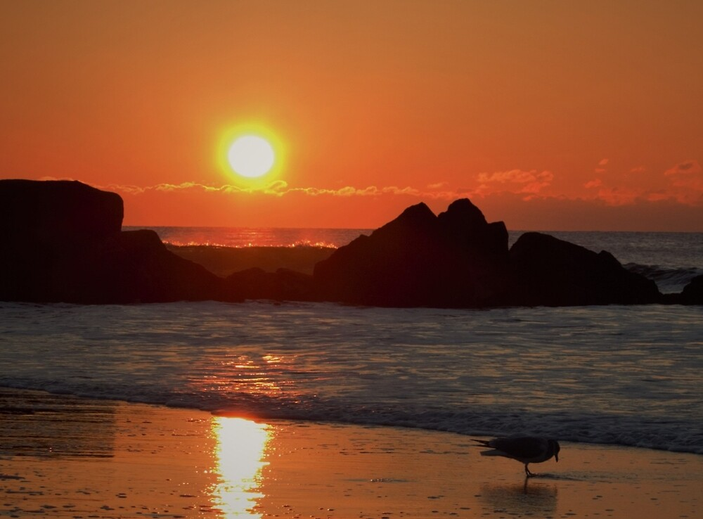 Long Beach, NY Sunrise w/Gull by AnneDB