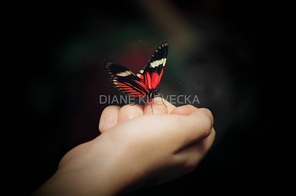 Magical  Butterfly Moments by DIANE KLEVECKA