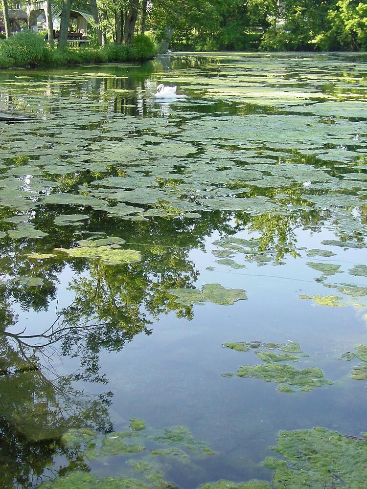 Moss & Swan by suelucat
