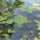 Moss under water by suelucat