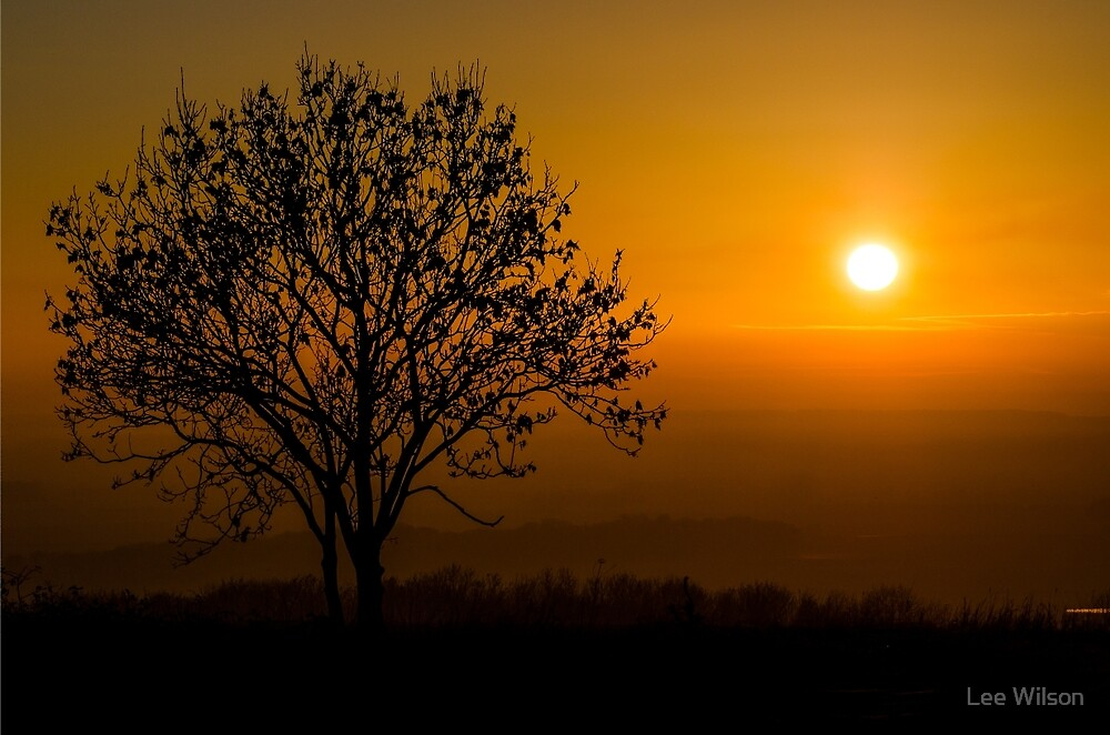 Sunset Tree Silhouette by Lee Wilson