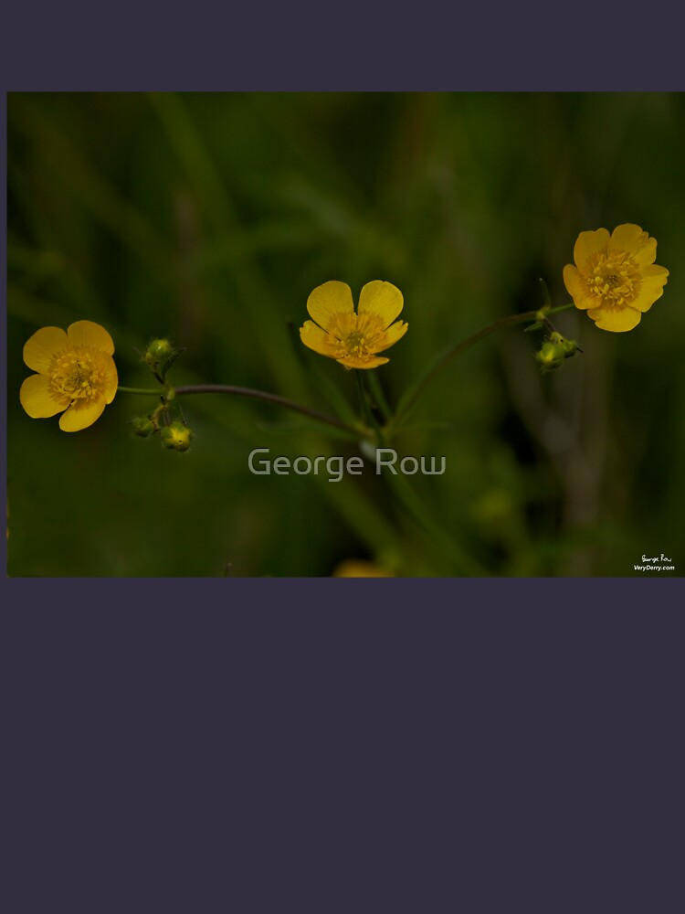 Three Meadow Buttercups - Burntollet Woods, County Derry by VeryIreland