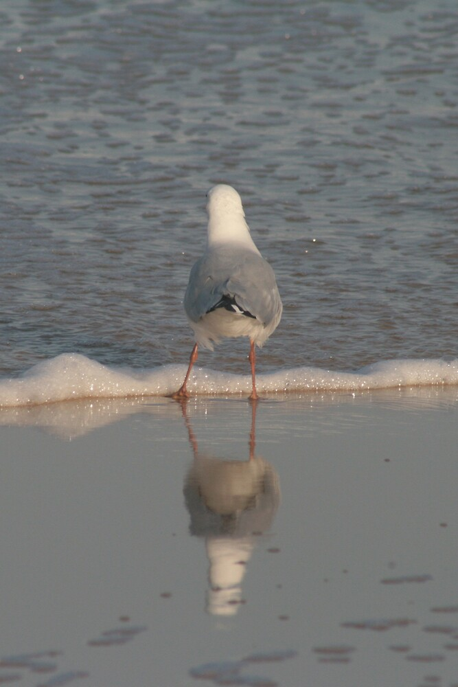Gull on Glass by Norma Blackburn