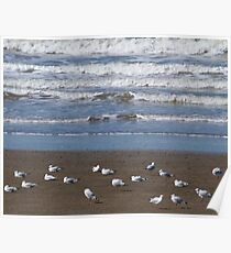 Sea, sand and seagulls!  Poster