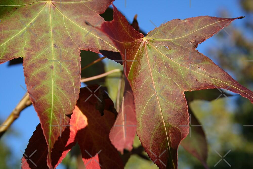 Autumn Colour by David Tate