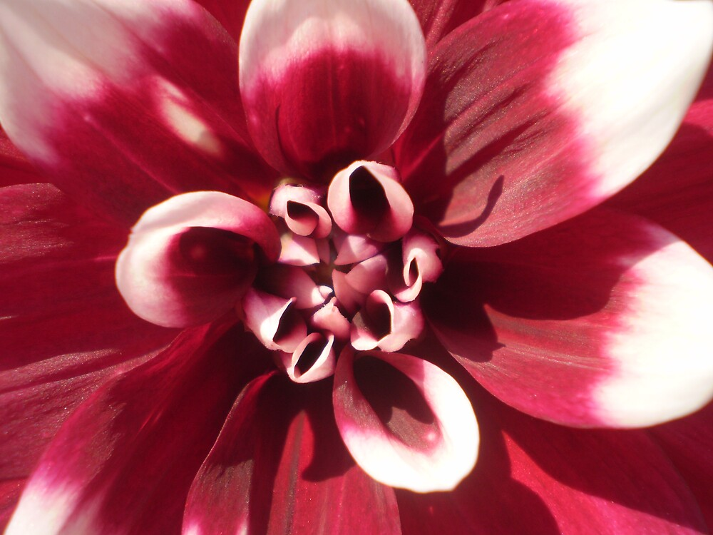 flower by 718671