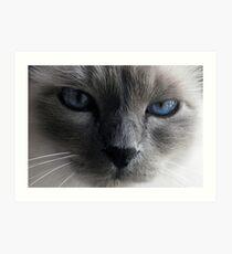 The blue eyed cat Art Print