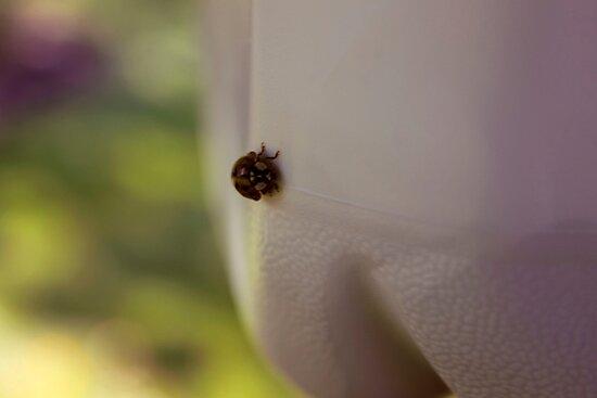 ladybug by highwaywitchery