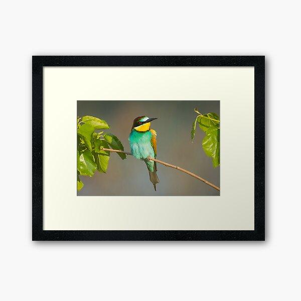 Angry bird - European bee eater Framed Art Print