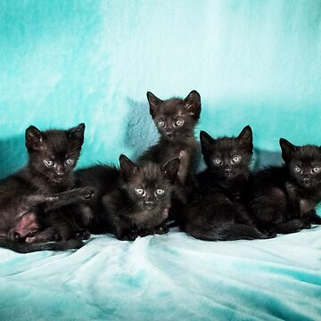 Five kittens turquoise poster by jo-twinflame