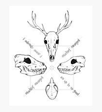 Marauder Skulls Photographic Print