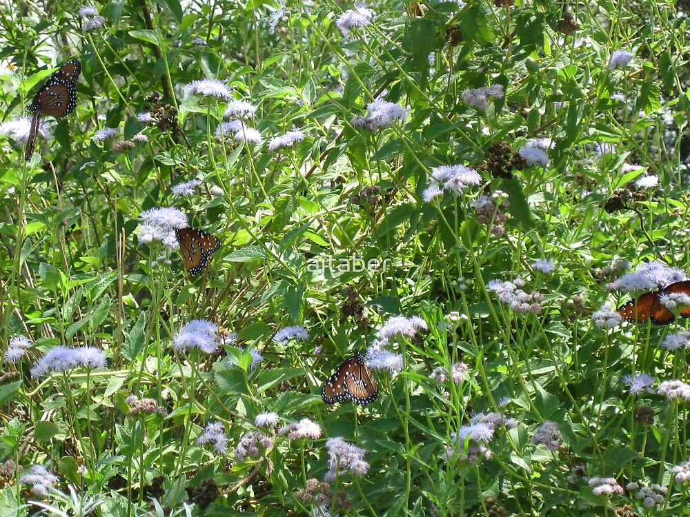 field of butterflies by ajtaber