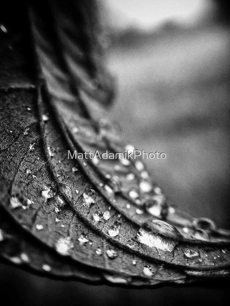 iPhone Macro #1 by MattAdamikPhoto
