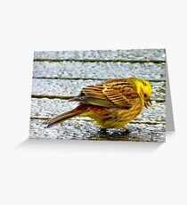 I wish these seeds weren't so hard! - Yellow Hammer - NZ Greeting Card