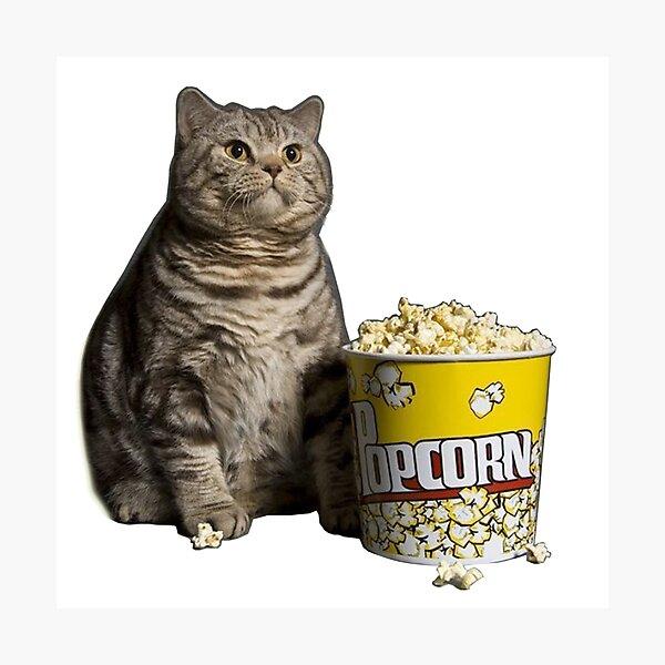 popcorn cat Photographic Print