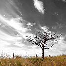 Wisptree by Penny Kittel