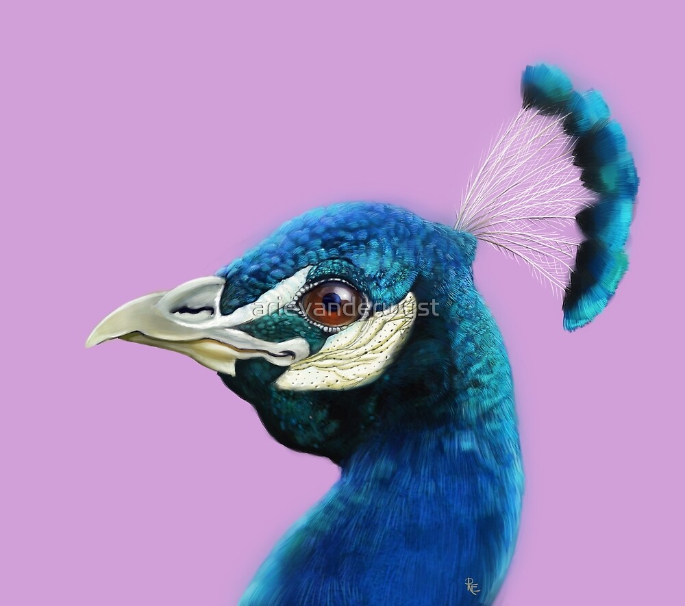 Happy Peacock 2 by arievanderwyst
