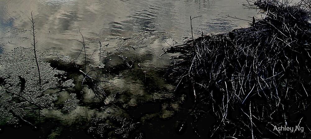 Water and Reflections by Ashley Ng