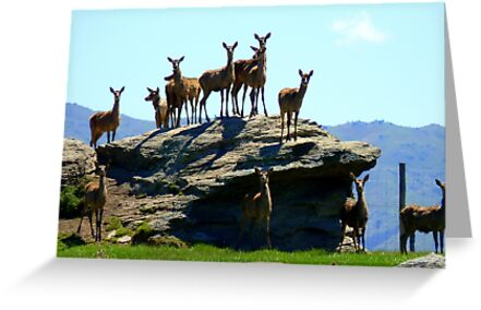 The Vantage Point! - Deer - NZ by AndreaEL
