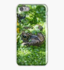 Baby Frog covered in duckweed in a pond iPhone Case/Skin