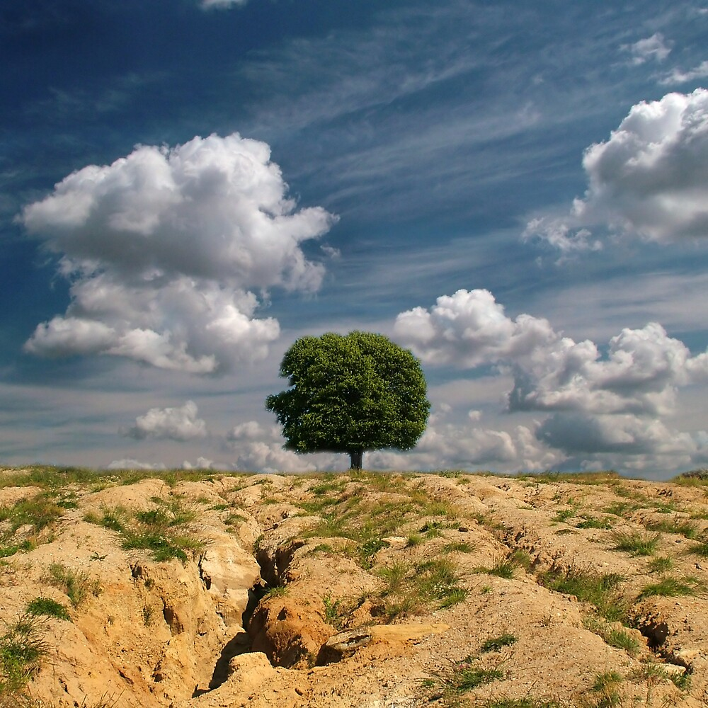 Desert soul by Vlad Sabau
