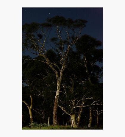 Moonlit Gums Photographic Print