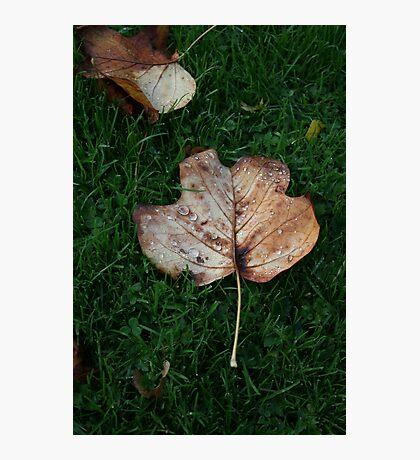 Fall of the Leaf Melancholia Photographic Print