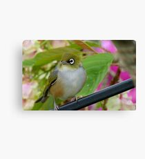 Perfection - Harmony With Nature - Silver-eye - NZ Canvas Print