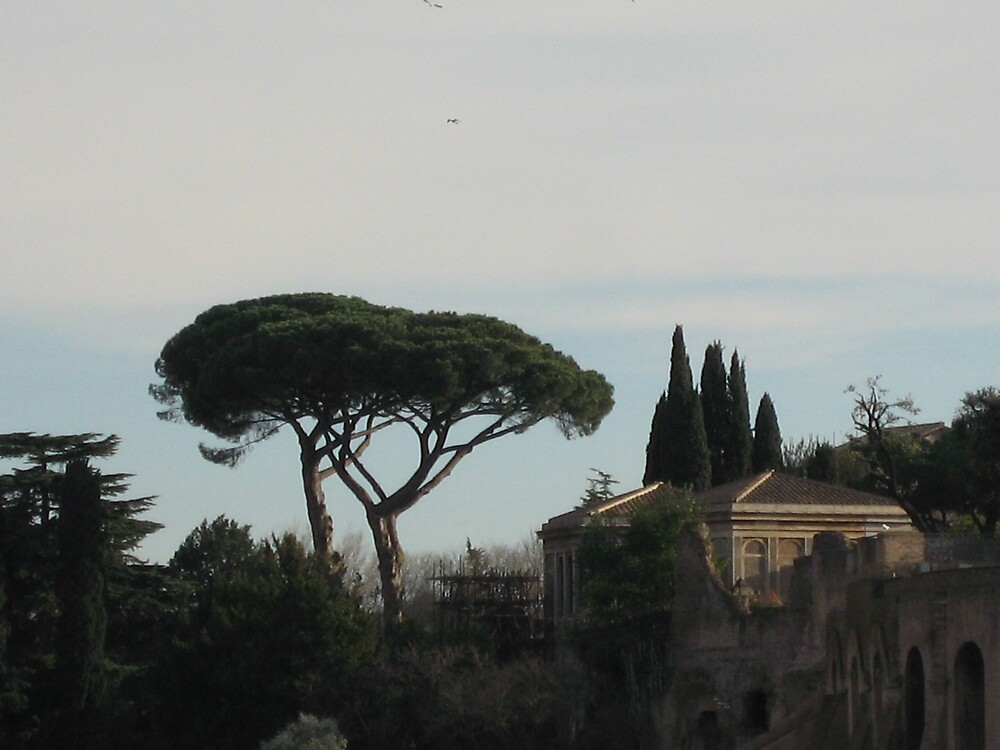 Roman Trees by shoey